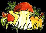 La casa del fungo